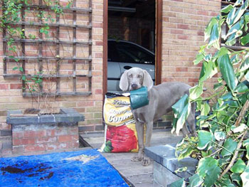 Dudley finds gardening very therapeutic!!